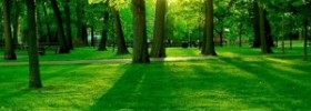 Green Color Meaning – The Color Green