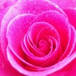 Pink Color Meaning The
