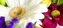 Flower Color Meanings and Symbolism