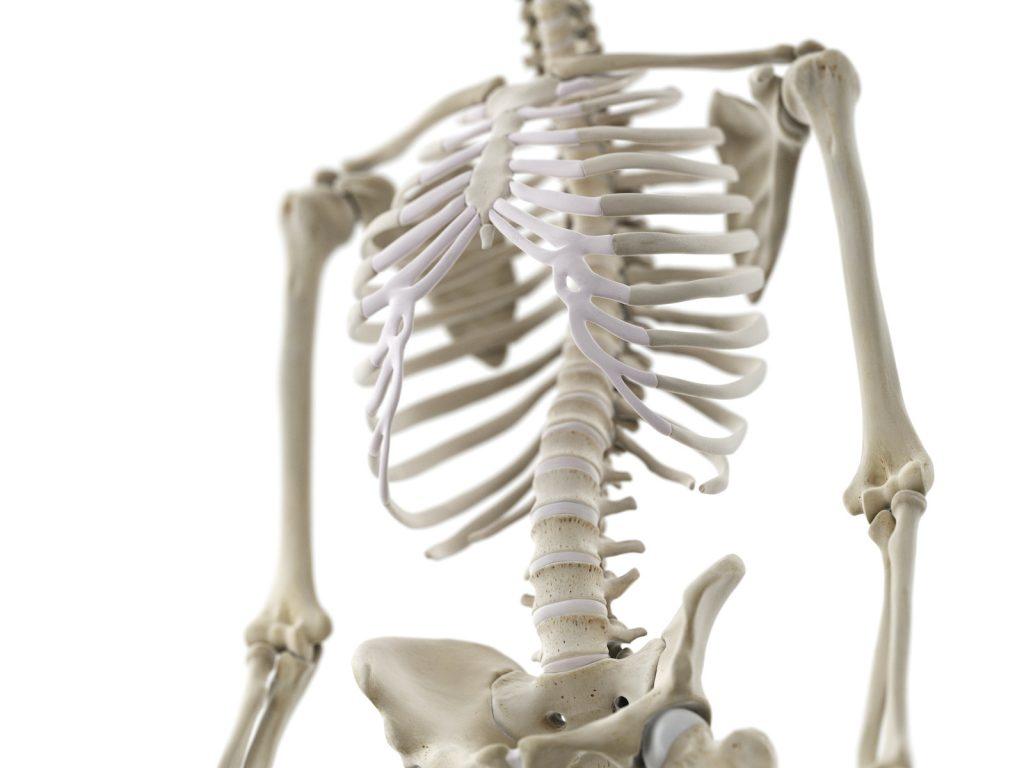 Bones contain calcium phosphates, which makes them white.
