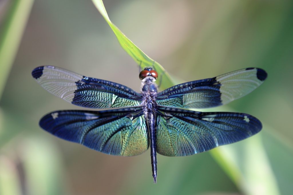 Colorful dragonfly on a plant