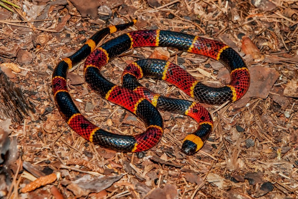 Coral snakes are certainly beautiful, but they are highly venomous as well.