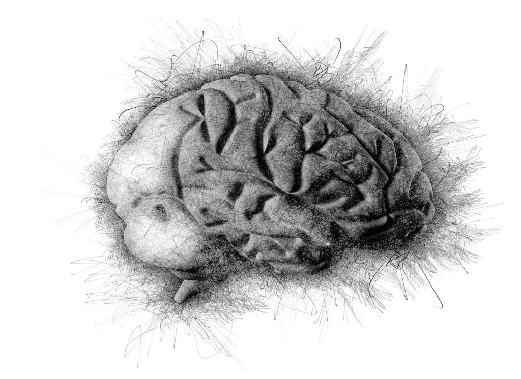 Much of the tissue in the brain and central nervous system is divided into gray matter and white matter.