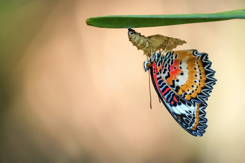 The leopard lacewing has one of the most intense and interesting patterns on the list.