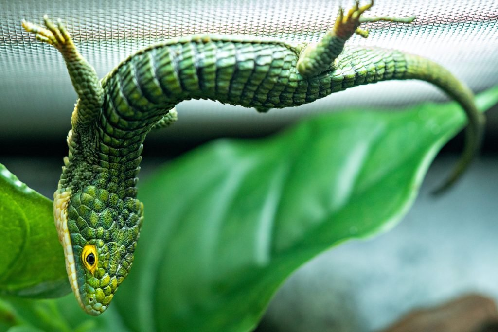 Mexican Alligator Lizards look a little like figurines at first glance.