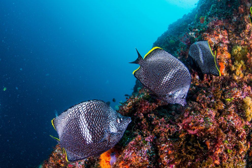 A single wrought iron butterflyfish can sell for almost ,000.