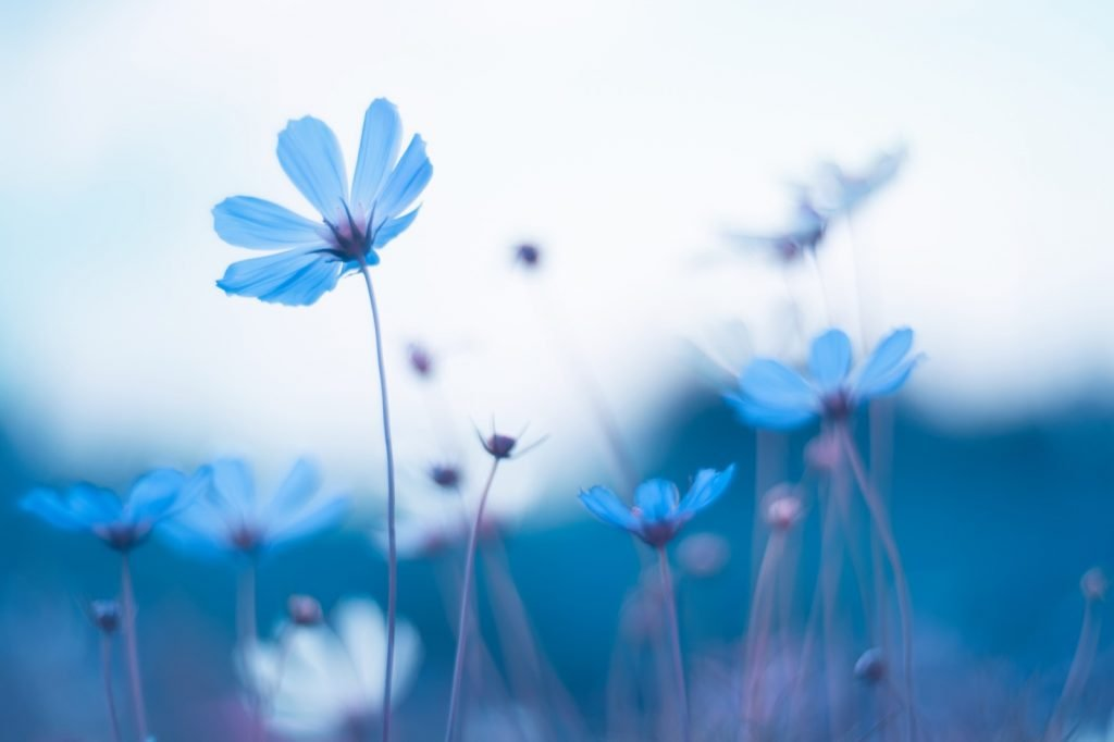 Artistic image of delicate blue flowers with soft selective focus