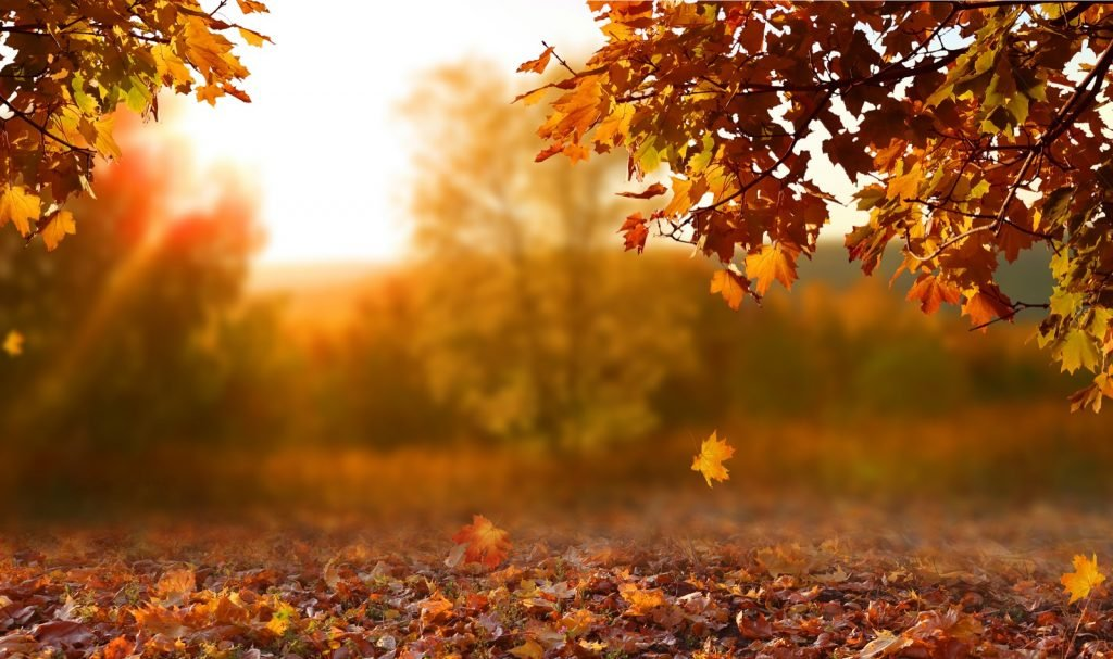 Autumn landscape in a park with colorful orange leaves