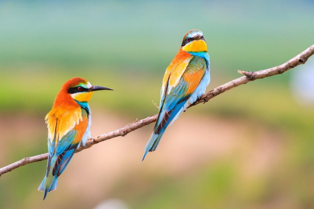 Beautiful birds in many colors sitting on a branch