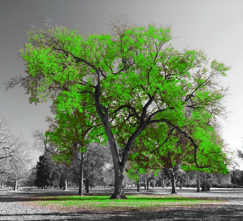 Big tree with bright green leaves in a surreal black and white landscape