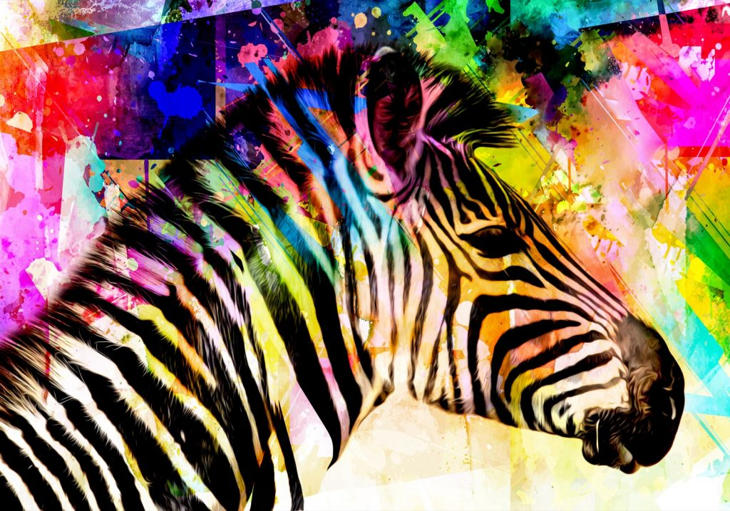 Black and white zebra with bright colors all around