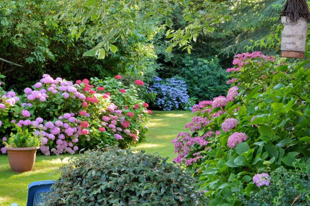 Blossoming flowers in different colors in summer garden