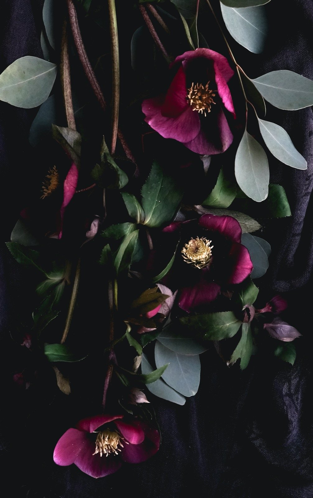 Bouquet of purple flowers on a dark background in low key colors