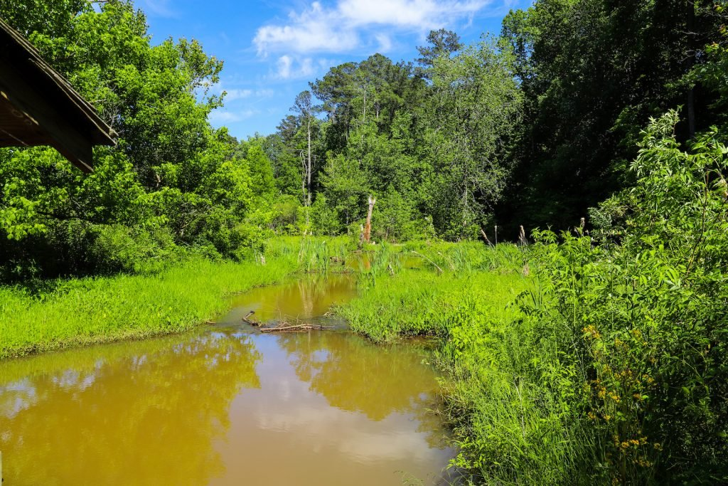 Brown creek water surround by green nature