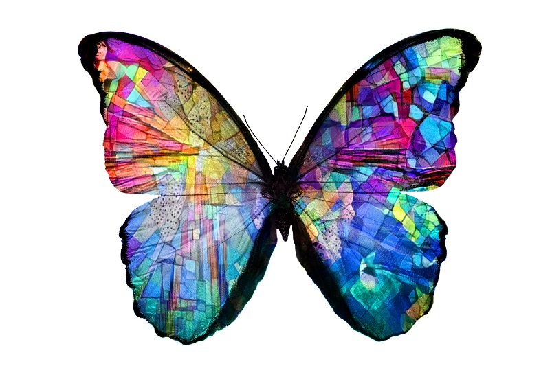 Butterfly with rainbow colored wings