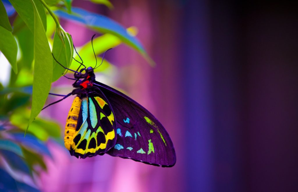 Butterfly with neon colored wings