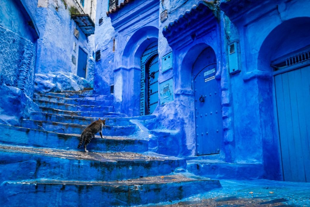 A cat likes to climb stairs on a blue colored street in Chefchaouen, Morocco