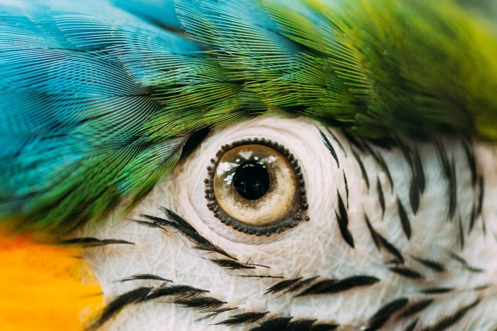 Eye of a colorful bird close up