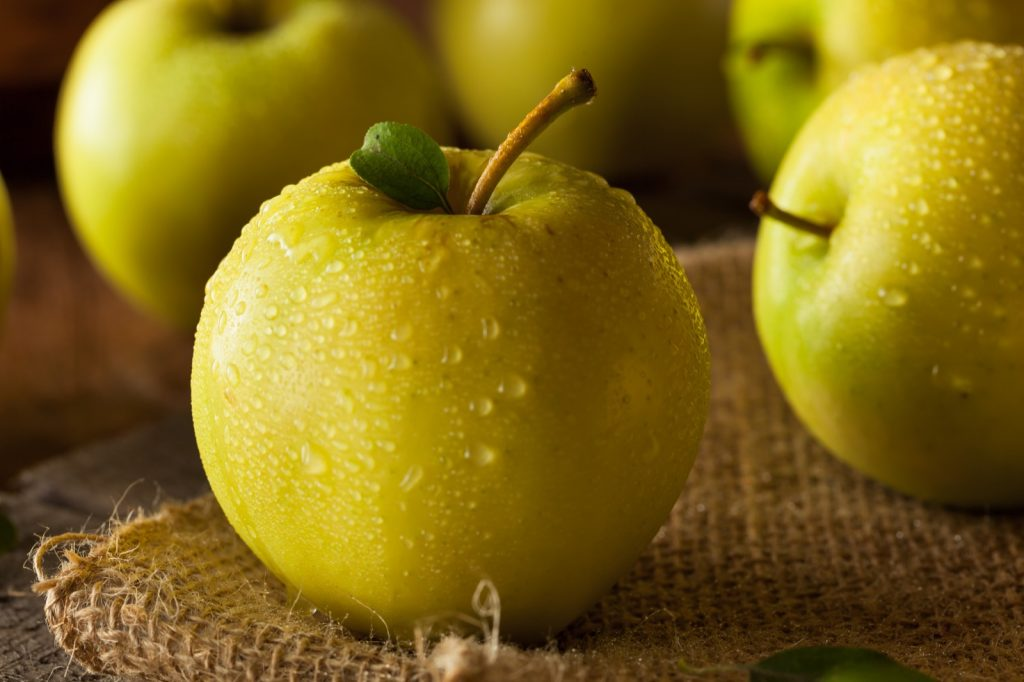 Close-up of yellow organic golden delicious apples