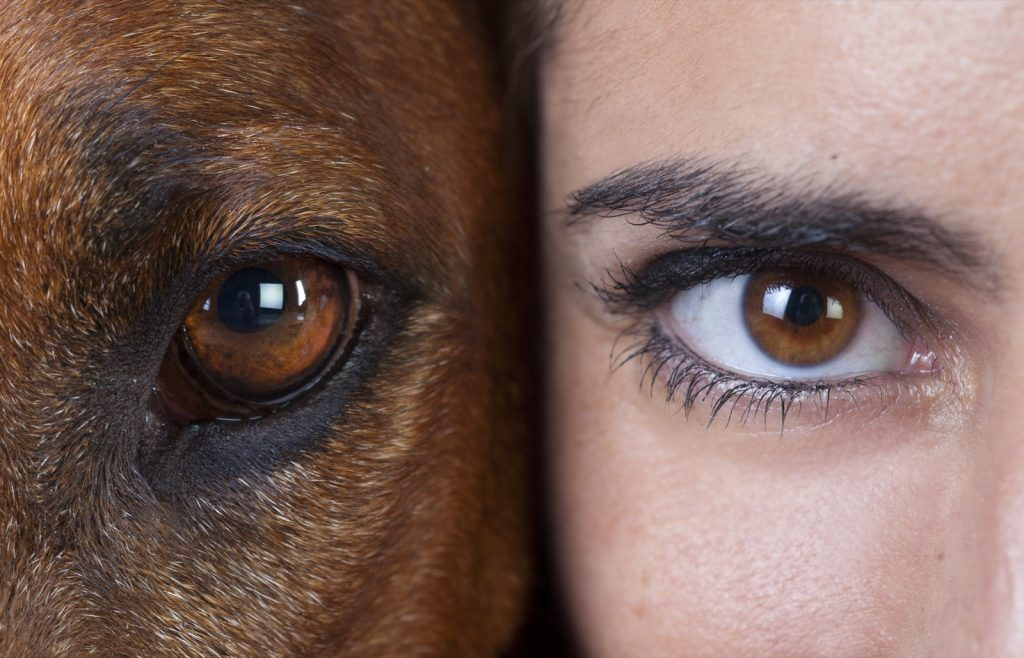 Closeup of eye of a human and a dog