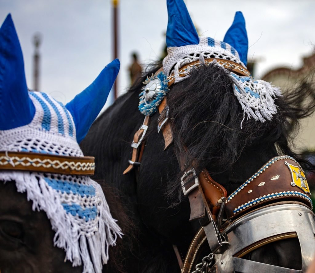 Closeup of horses with decorated heads in blue and white colors at the Oktoberfest in Munich, Germany