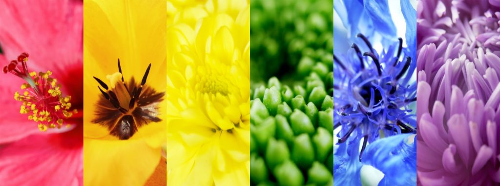 Collage of different colorful flowers
