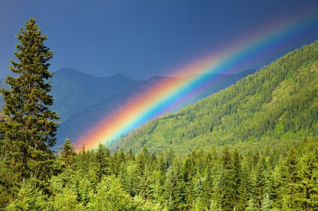Colored rainbow over forest in the mountains