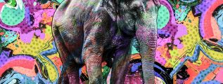 Thai elephant with colorful background