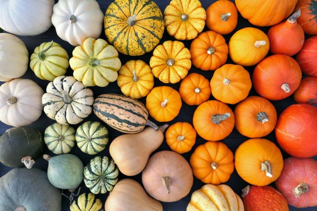A collection of colorful pumpkins