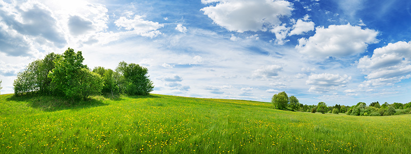 Outdoors in colorful nature with blue sky and green grass
