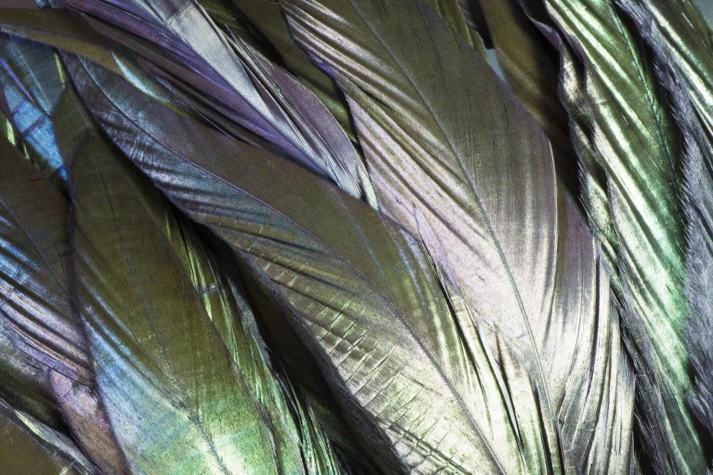Closeup of crow feathers, to highlight the colors of the black feathers, special lights have been used to see the green, blue and purple colors