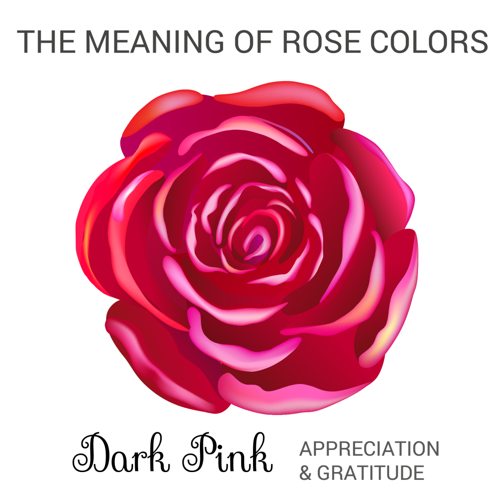 dark pink rose color meaning infographic