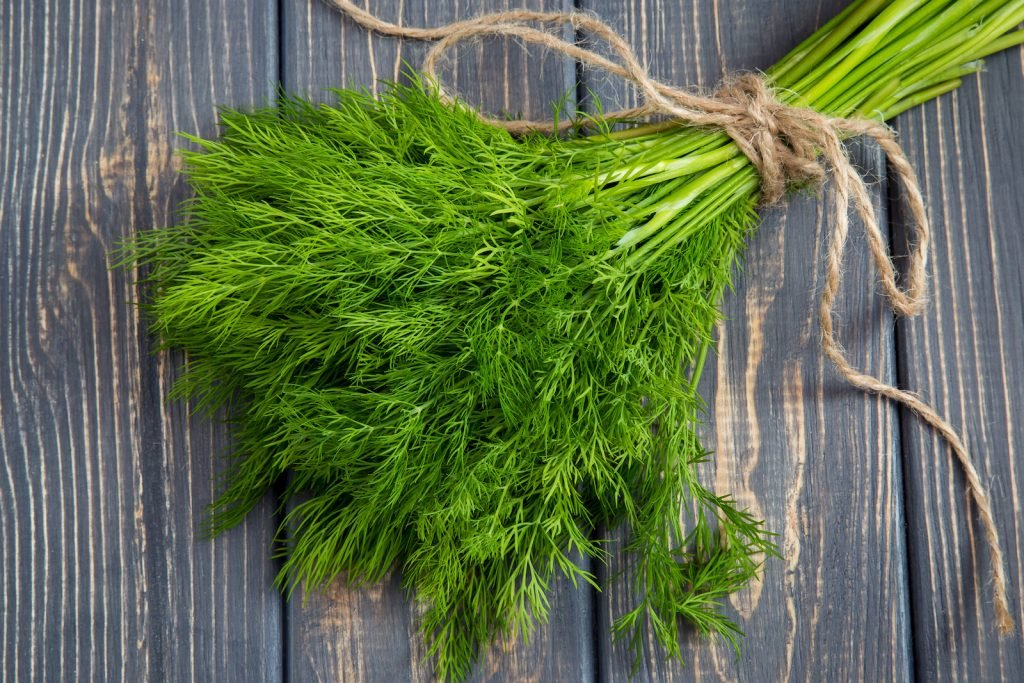 Fresh dill herb on rustic wooden table