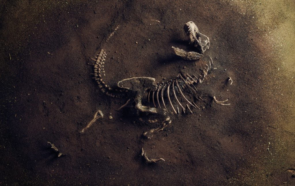 Tyrannosaurus Rex dinosaur fossil discovered by archaeologists