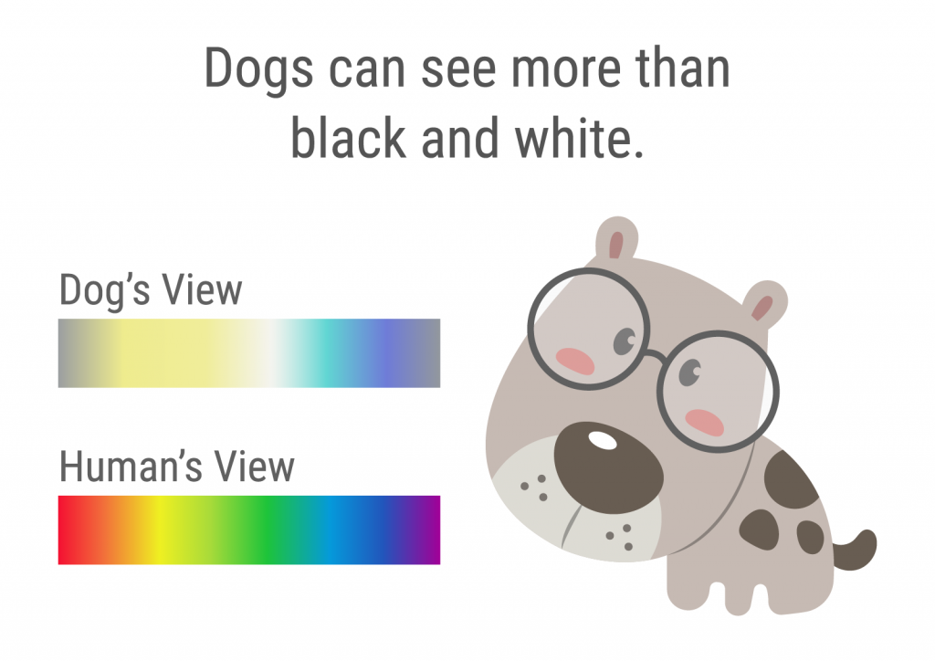 Illustration shows that dogs can see more than black and white but less colors than humans
