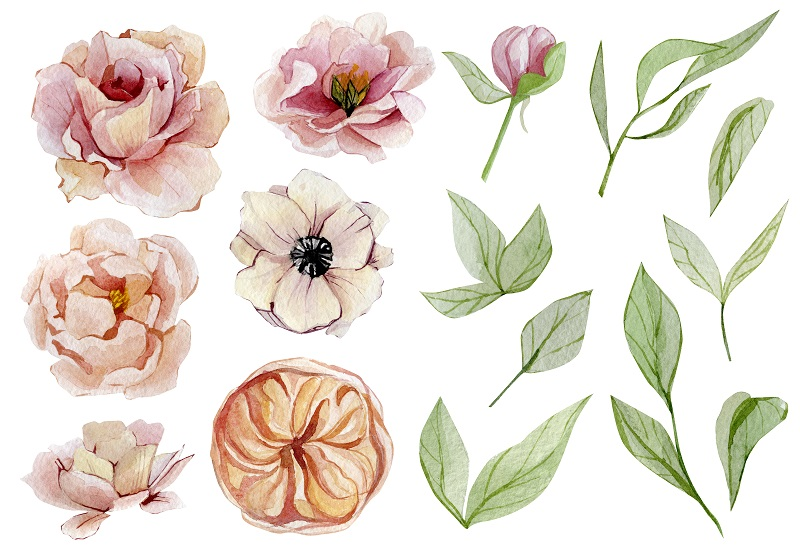 flowers and leaves drawn with watercolors