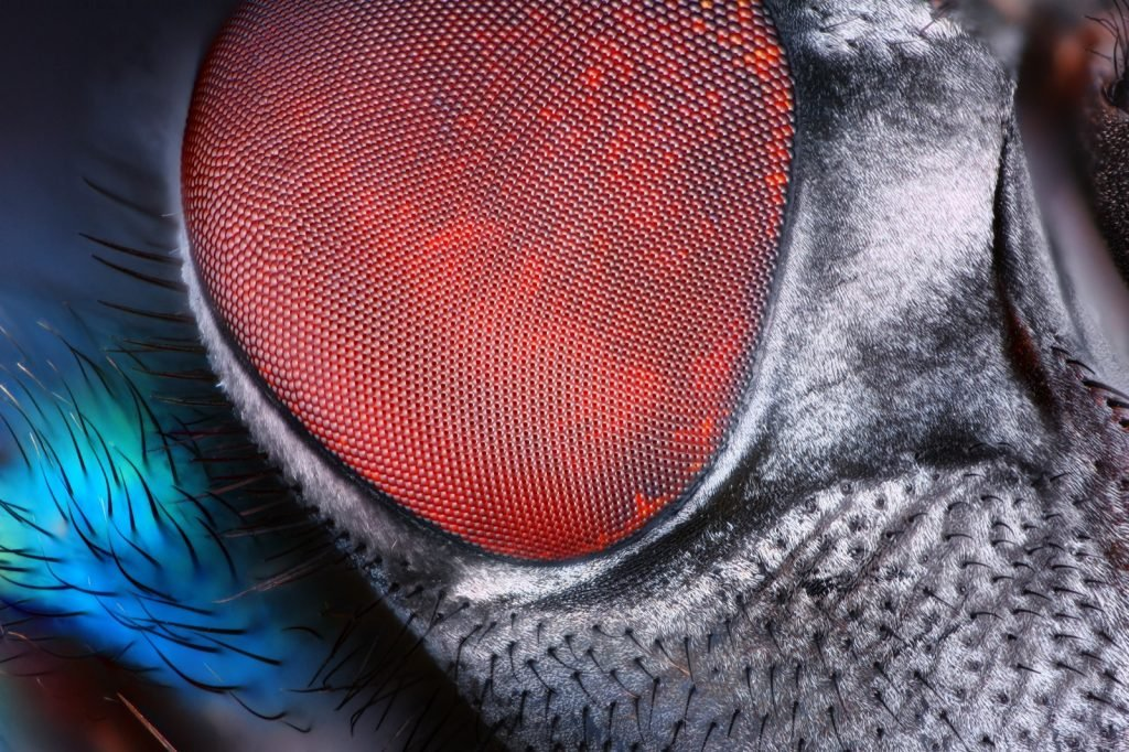 Sharp and detailed fly compound eye surface at extreme magnification