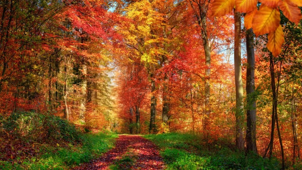 Forest scenery in autumn with natural analogous colors
