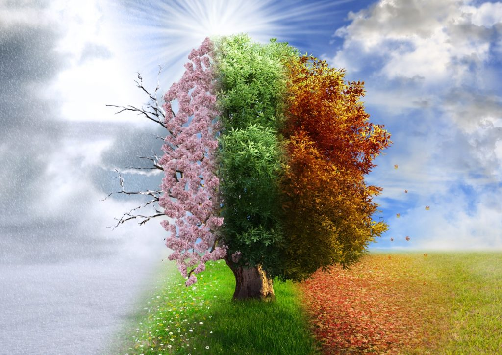 Illustration of nature's four seasons with a tree that changes colors during winter, spring, summer and autumn