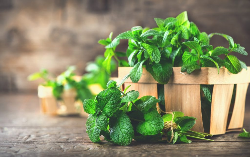 Bunch of green mint leaves on a wooden table