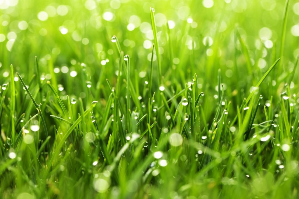 closeup of green grass with dew on it