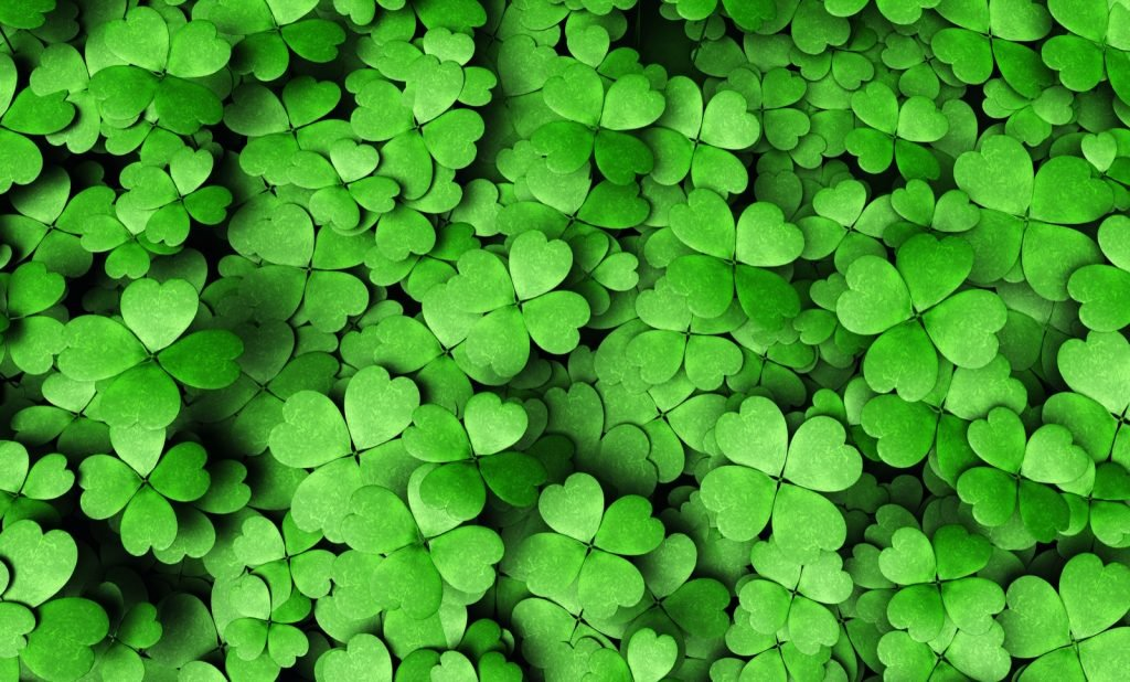 Top view of green four-leaf clovers symbolizing luck