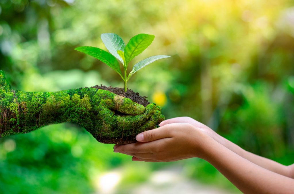 Green hand holding tree symbolizing nature conservation on Earth Day
