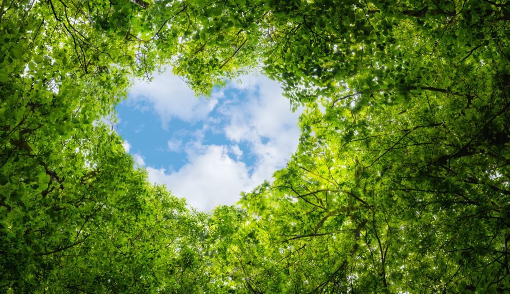 Green leaves and blue sky with heart shape symbolizing love
