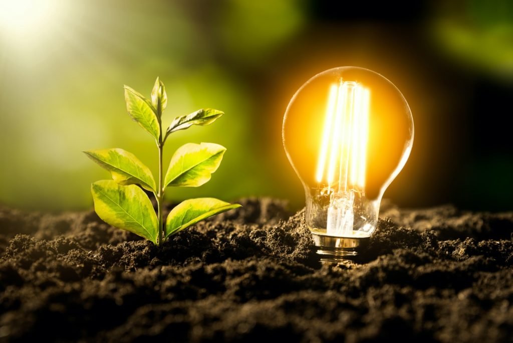 Growing plant and glowing yellow colored light bulb in soil