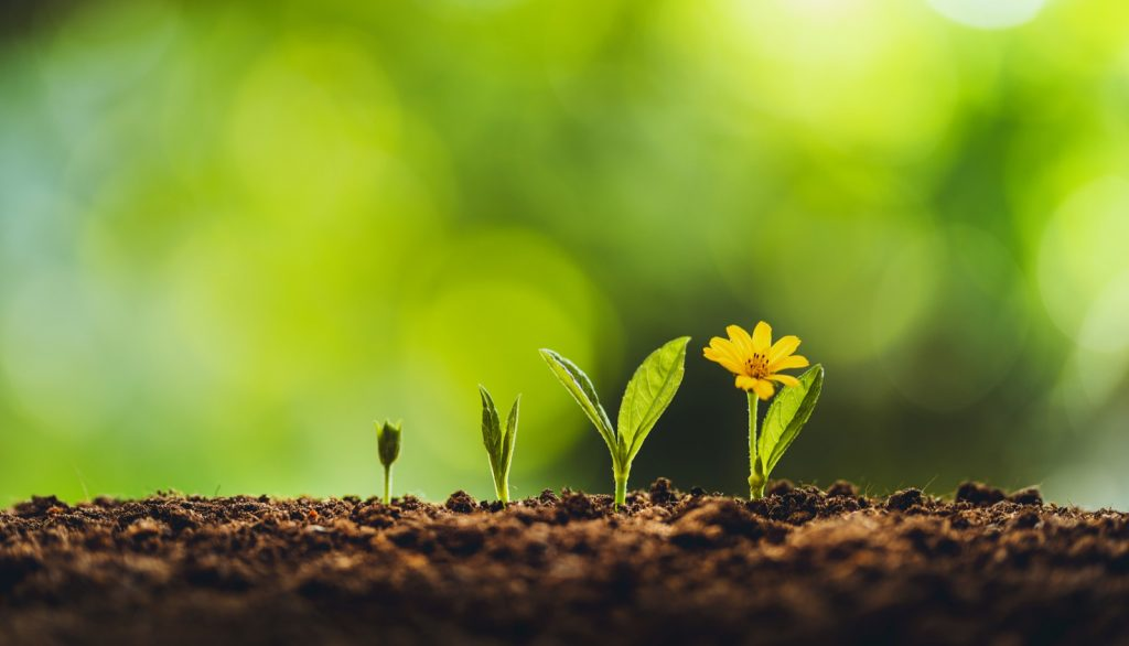 Growth of young plant in nutritious soil