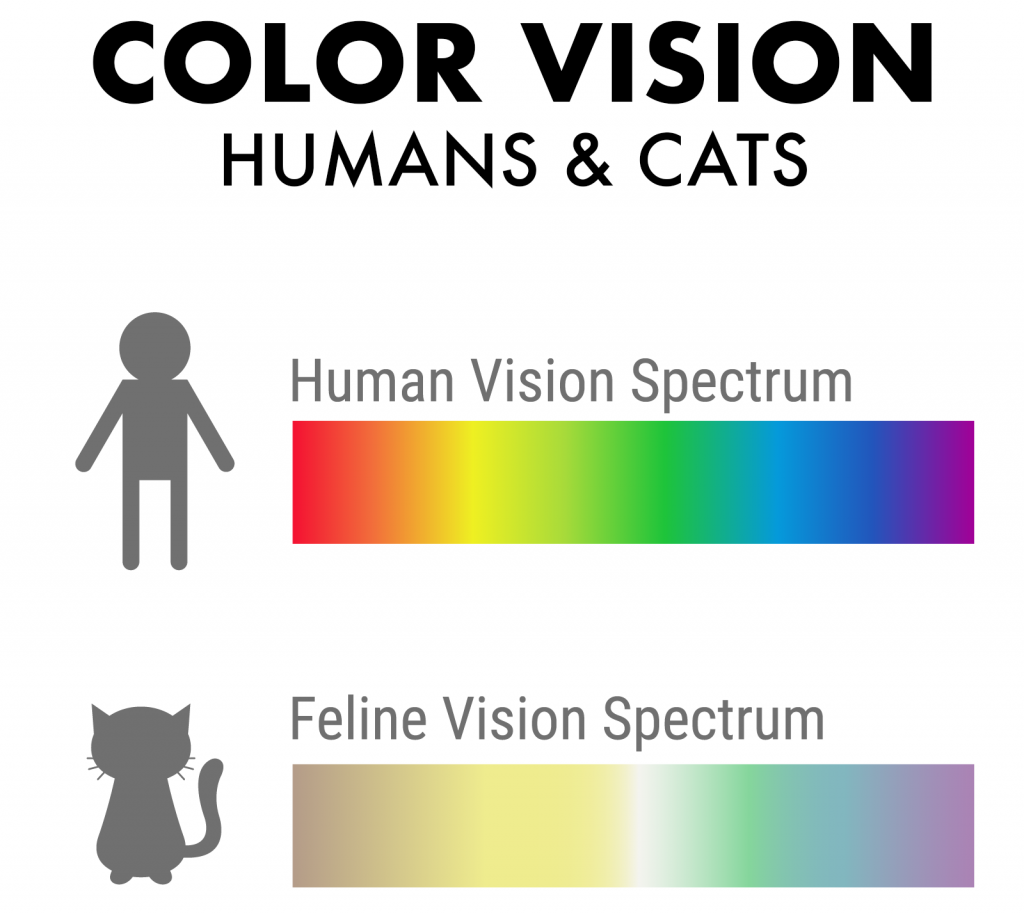 Illustration of color vision in humans and cats