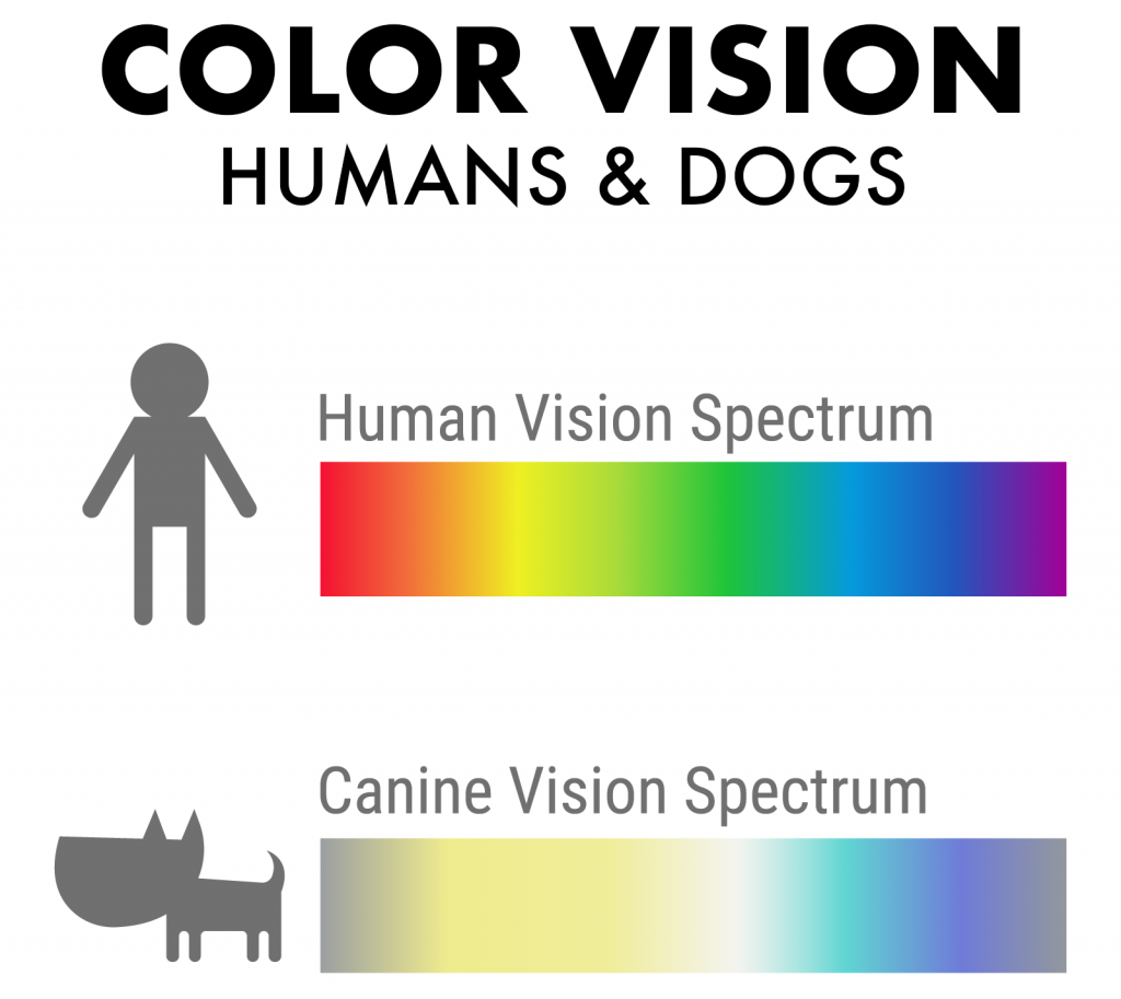 Illustration of color vision in humans and dogs