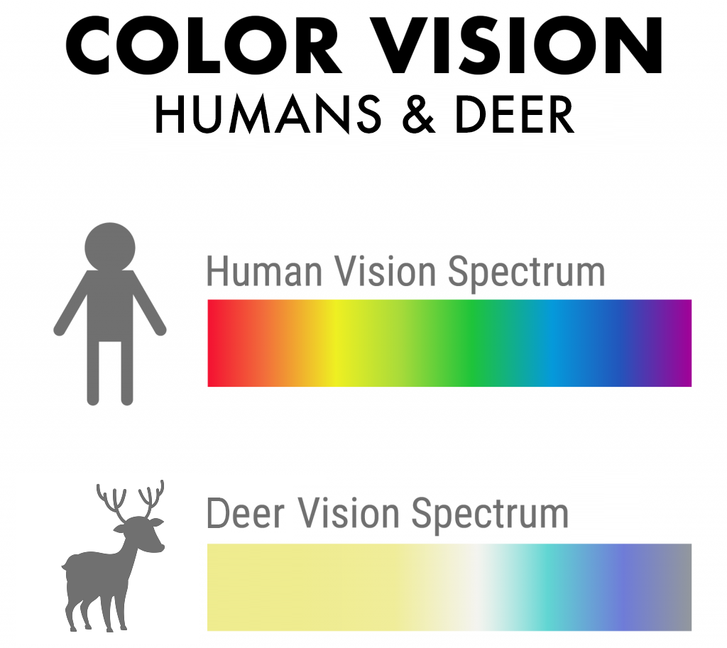 Illustration of color vision in humans and deer