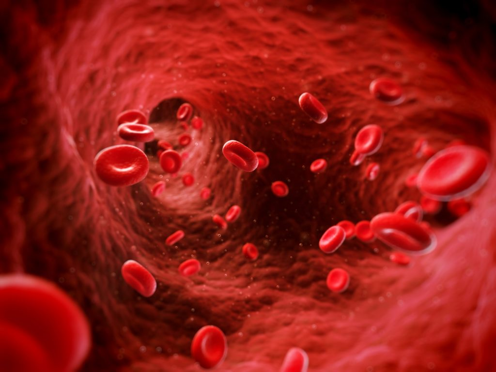 Illustration of red human blood cells inside the body